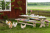 Hens around table and benches on lawn in garden