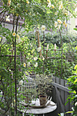 Rose 'Ghislaine de Feligonde' on tan arched trellis with candlesticks, birdcage, and antlers as decoration