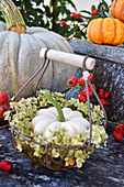 White pumpkin in wreath of hydrangea in small basket