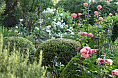Rose garden with boxwood balls