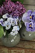 Violas, pansies and lilac