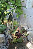 Mini succulents in small pots, decorated with a heart made of branches and utensils
