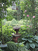 Rose arch with climbing rose 'Giardina', column with flower spindle between hostas, box and hydrangeas