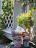 Autumn arrangement with myrtle topiary, budded heather, prickly heath, and sedum plant next to a garden Bench