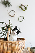 Cat sitting in basket decorated for Christmas