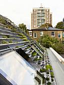 View across terraced roof garden