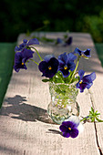 Posy of blue violas