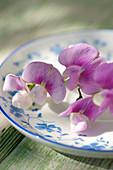 Everlasting sweet pea flowers on plate