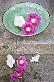 Lilac and white hollyhock flowers in green bowl