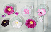 Hollyhock, mallow and marsh mallow flowers in glass dishes