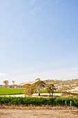 Tasmanian sun at Meadowbank vineyard in the Derwent Valley