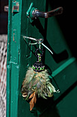 Tassel made of feathers and beads hanging from key in green wooden door