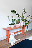 Cat sitting next to philodendron, cactus and succulent on red bench