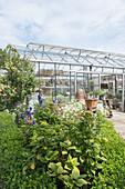 Sonniger Garten mit Glashaus