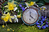 Narcissus, squills, snowdrops, cornelian cherry and box arranged around old alarm clock