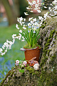 Grape hyacinths in small rusty bucket, Easter bunny and Easter eggs