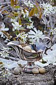 Easter nest in silver sauce boat with jay feathers and serviceberry blossom