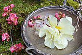 Tulip, Japanese quince and purple-leaf plum tree flowers on silver dish