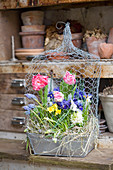 Tulips, reticulated iris, narcissus, grape hyacinths and hyacinths in zinc box with chicken wire cover
