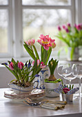 Tulips and grape hyacinths planted in sauce boats and pots decorating table