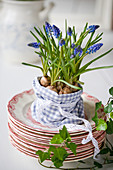 Grape hyacinths planted in small fabric bag with lace ribbon
