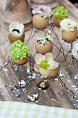 Spring flowers in eggshells in small wire holders