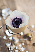 Anemone in eggshell in small wire holder