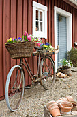 Old bicycle with spring flowers in basket and on luggage rack leaning against exterior wall