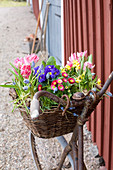 Old bicycle with spring flowers in basket