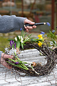 Woman typing wreath with grape hyacinths, hyacinths, narcissus, crocus and star-of-Bethlehem on garden table