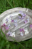 Lilac florets on pewter plate