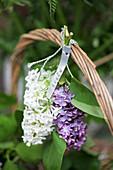 Fliederblüten in lila und weiß an Korb gebunden
