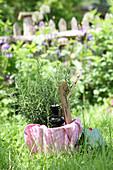 Rosmarin-Tinktur und frischer Rosmarin im Garten