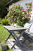 Table and bench next to climbing rose