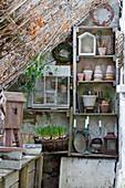 Plant pots, utensils and basket of grape hyacinths on shelves