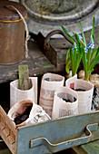 Handmade paper plant pots and grape hyacinths