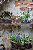 Traubenhyazinthen in Korb und Tasse, Kranz und Nest mit Eiern