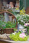Zutaten für Sommerkranz: Frauenmantel, Rosen, Korb mit Vogelwicke und strahlenloser Kamille, Mutterkraut in Vase