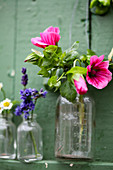 Blühende Malve in Glasflasche