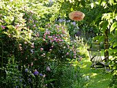 Ramberrose 'Frau Eva Schubert', deck chair in the shade under the tree