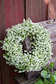 White summer wreath of cow parsley
