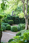 Boxwood balls in the garden with gravel bed