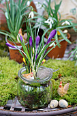 Mason jar with crocus in moss as an Easter decoration
