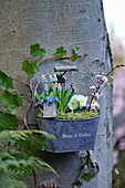 Zinc container with grape hyacinths, pansies, and a branch of Cherry plum blossoms hung on a tree trunk