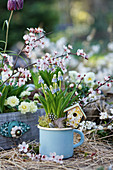 Grape hyacinth in an enamelled milk pot, decorative plug bird feeder, branches of blood plum and filled primrose