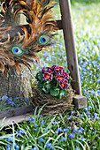 Ruffled primulas in bird's nest and wreath of peacock feathers