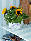 Sunflowers in DIY planter made of reinforced fabric