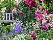 Wooden bench next to picturesque bed of roses ('Ghislaine de Féligonde', 'Laguna', 'Super Excelsa', 'Super Fairy') and campanula