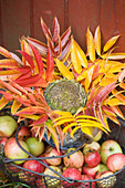 Basket with apples, colourful autumn leaves and flower head of a sunflower