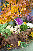 Autumn basket with edible pumpkins, kale, ornamental kale and budding heather